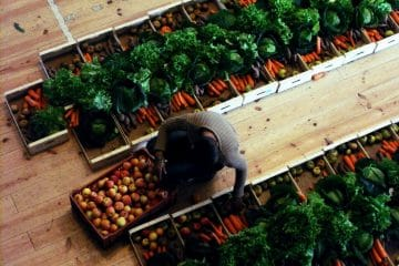 Fruta Feia: Porque o interior é que conta