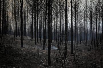 Floresta portuguesa demorará décadas a recuperar