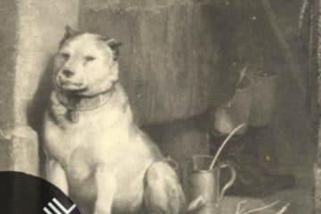 Vinil: Pavlov´s Dog – Late November