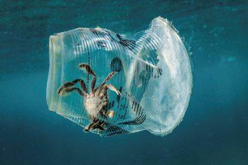 Oceanos plastificados, um problema com fim à vista