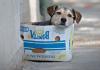 Pandemia de quatro patas: Das adoções por impulso ao abandono por falta de condições
